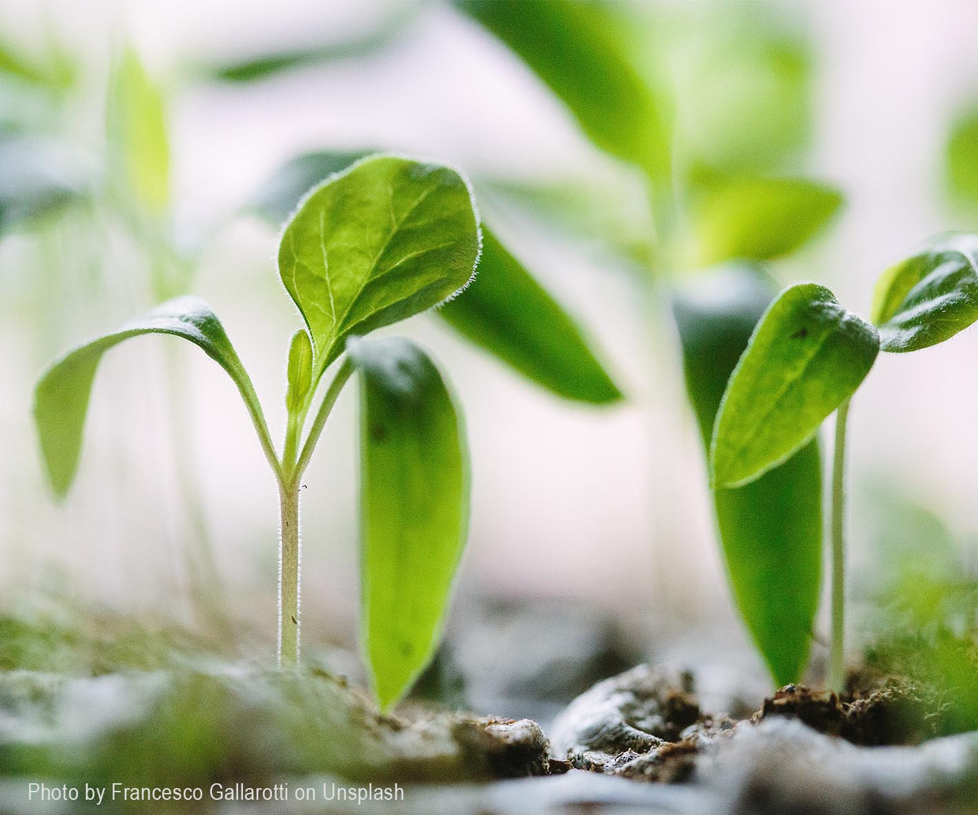 How-to-Grow-Your-Garden-From-Seeds - How-to-Grow-Your-Garden-From-Seeds